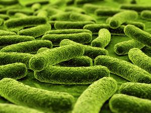 Пробиотики восстанавливают микрофлору органов