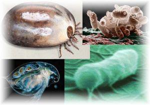 микробы и грибки