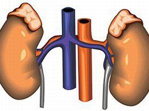 Надпочечниковая недостаточность: симптомы и лечение гипокортицизма