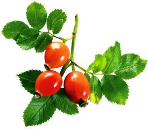 Плодами шиповника лечат цистит у женщин