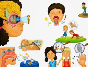 Органы чувств – взаимодействие с окружающим миром